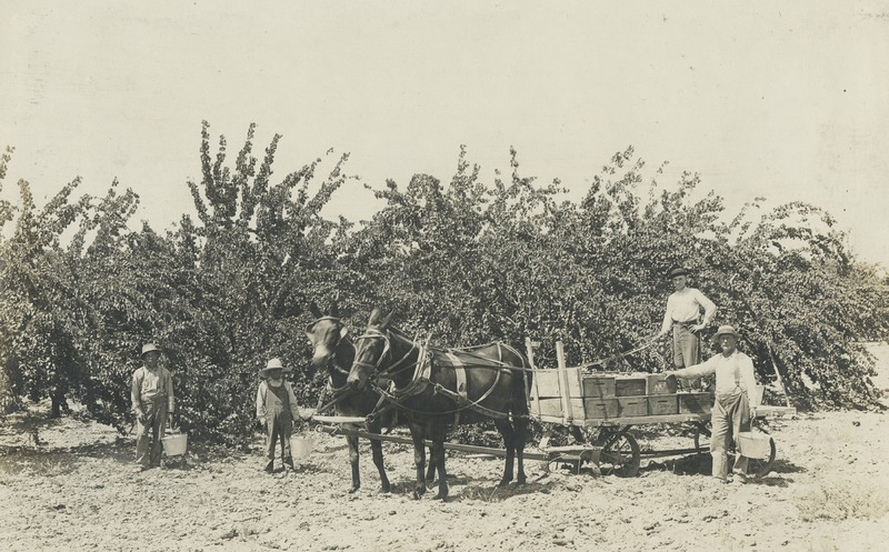 BOX 24 (RUTH-GOMEZ-COLLECTION)-AGRICULTURE-023.tif