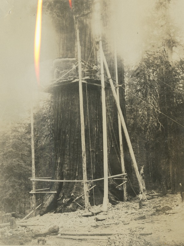 BOX 17-LOGGING-009.tif