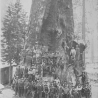 Loggers on Base of Giant Sequoia
