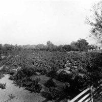Lakeside Ranch.