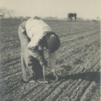 BOX 24 (RUTH-GOMEZ-COLLECTION)-AGRICULTURE-014.tif