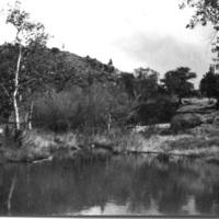 Pond near Stony Brook