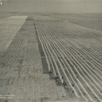 BOX 24 (RUTH-GOMEZ-COLLECTION)-AGRICULTURE-007.tif