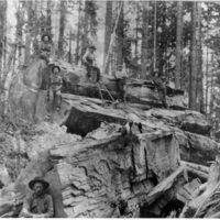 Loggers at Sugar Pine