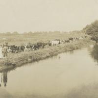 BOX 28-AGRICULTURE-DAIRIES-CREAMERIES-024.tif