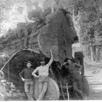 Typical log at Sugar pine