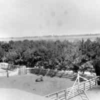 Bellevue Ranch corral