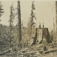 BOX 17-LOGGING-005.tif