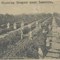 BOX 10-LEMOORE-AGRICULTURE-001.tif