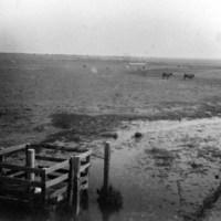 Lakeside Ranch pasture